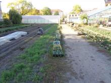 Bildinhalt: Flächen der ehemaligen Gärtnerei Toepel. Über 70 Gemüsesorten werden derzeit hier angebaut.